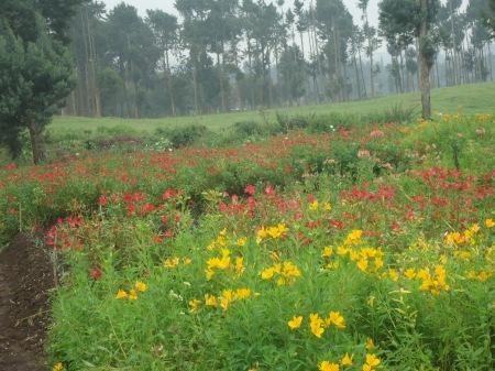 Fleurs du domaine de la fondation Imbabazi