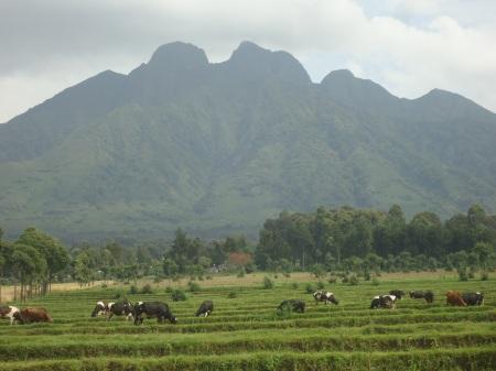 Panorama d'une partie de la chaîne des Virunga, entre Kinigi et l'entrée du Parc des Volcans